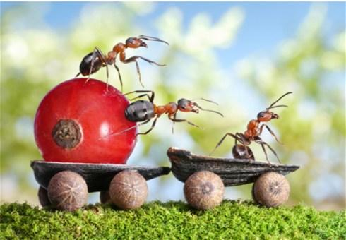 Kako se boriti protiv mrava