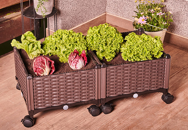 Grow Planter Box